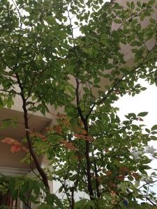 秋の植物2